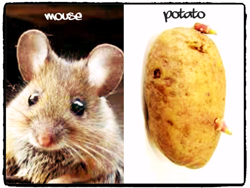 mouse potato edits