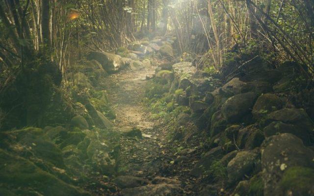 A path untrodden